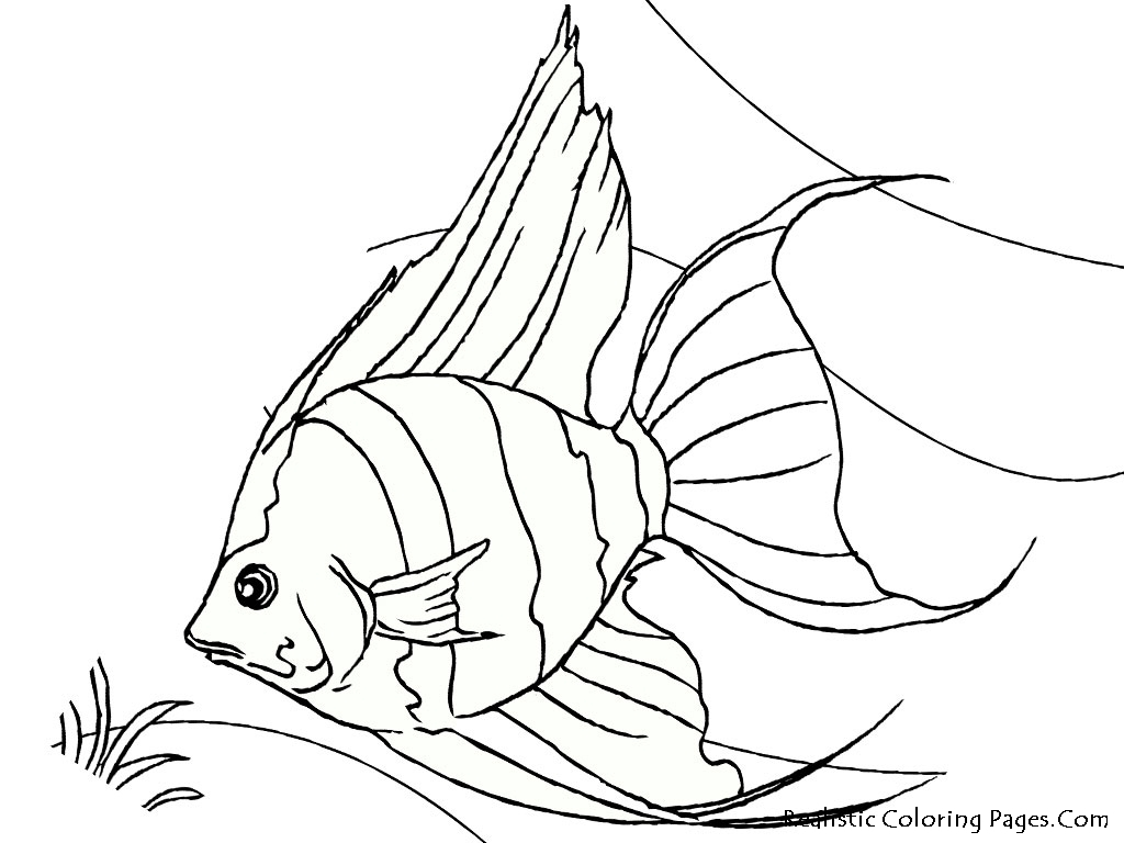 tropical coloring pages - tropical fish coloring pages