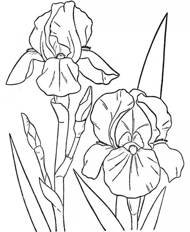 Tropical Coloring Pages - Tropical Flower Coloring Pages Coloring Home