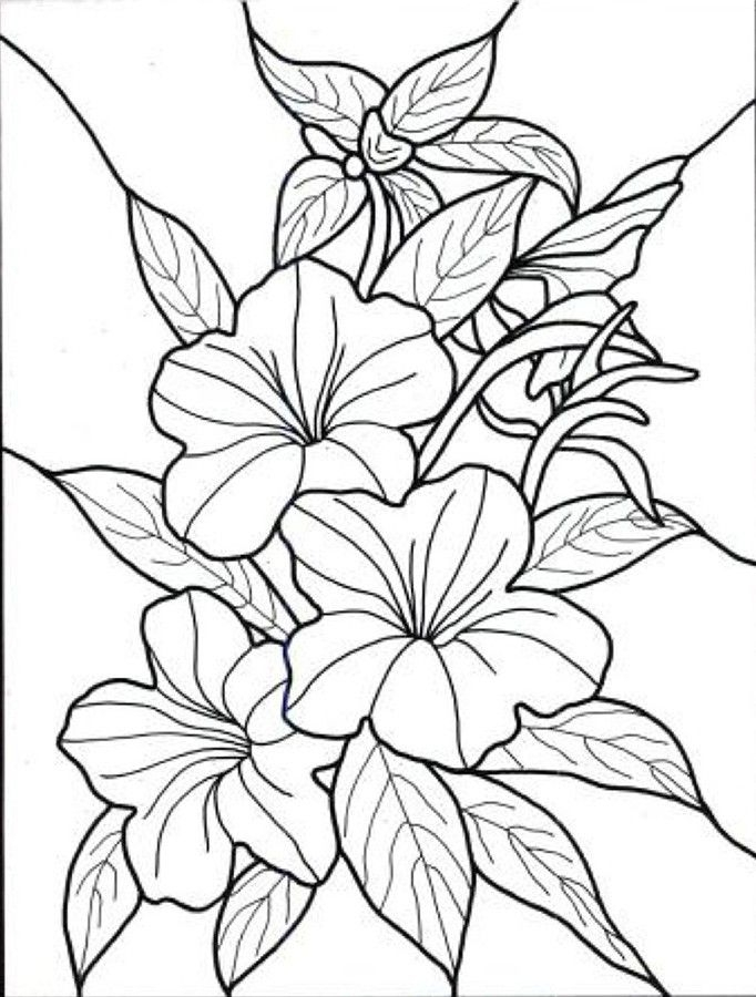 tropical coloring pages - tropical flowers coloring pages