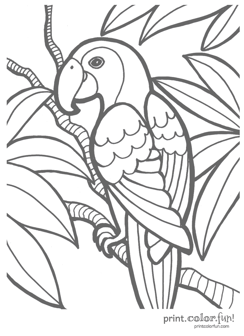 tropical coloring pages - tropical parrot