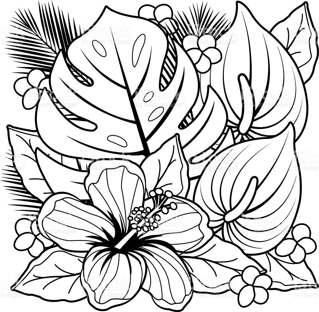 25 tropical coloring pages printable free coloring pages