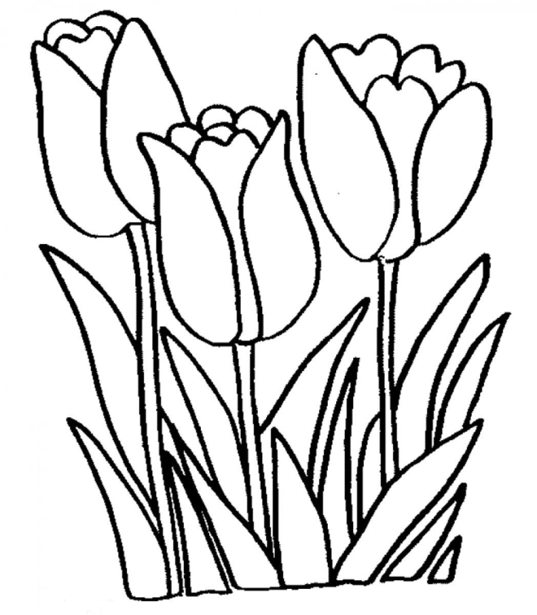 Tulip Coloring Pages - Free Printable Tulip Coloring Pages for Kids