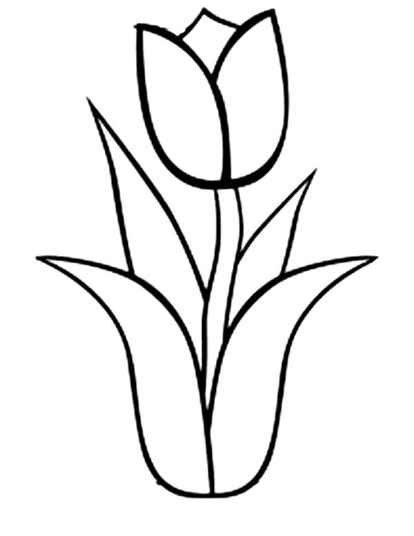 tulip coloring pages - tulip outline sketch templates