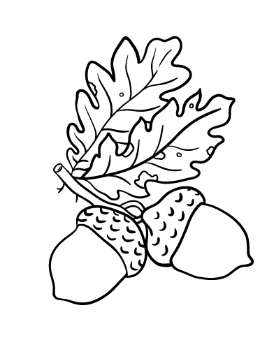 turkey coloring pages for preschoolers - acorn coloring sheet for preschoolers sketch templates