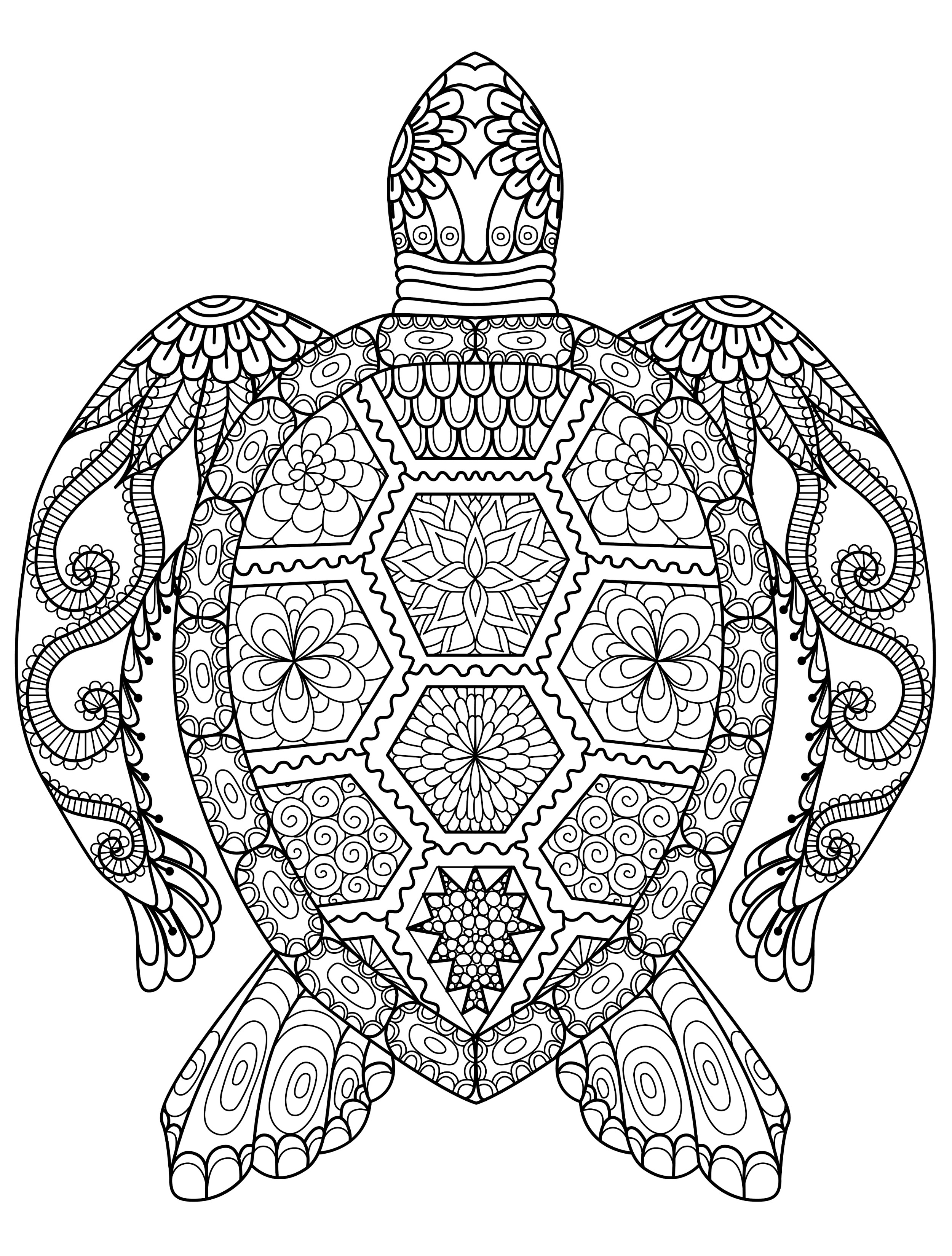 turtle coloring pages for adults - 3