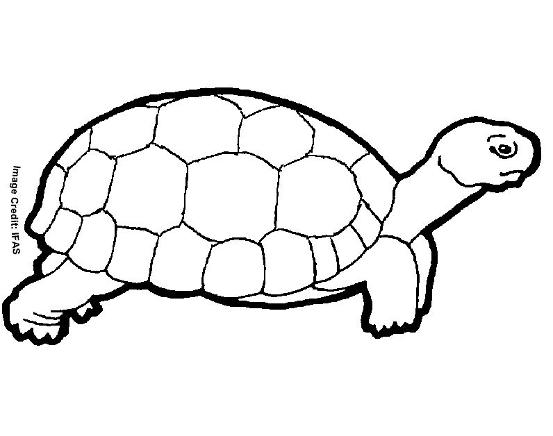 turtle coloring pages printable - free printable animal turtle coloring