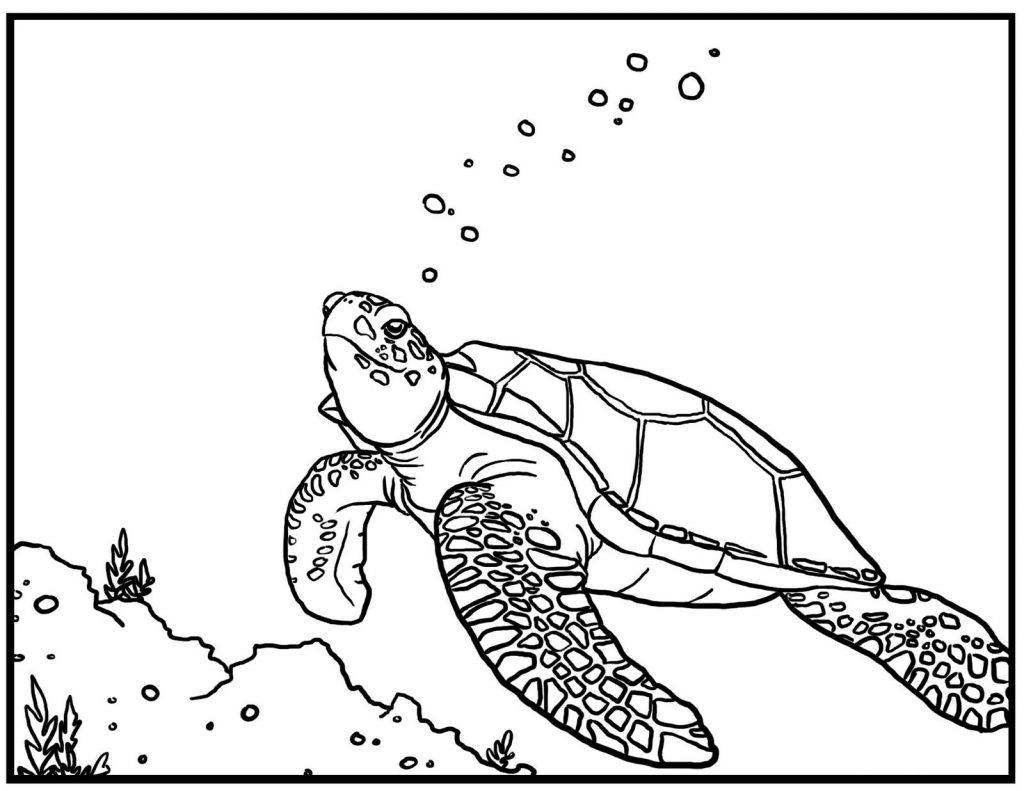 turtle coloring pages printable - turtle coloring pages
