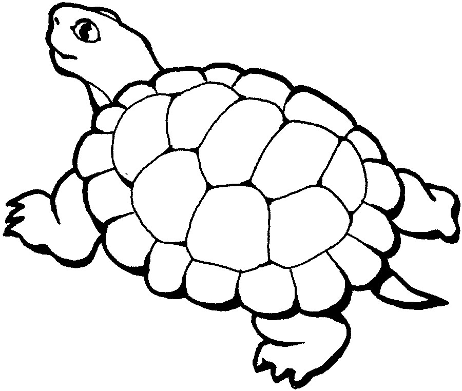 Turtle Coloring Pages Printable - Free Printable Turtle Coloring Pages for Kids