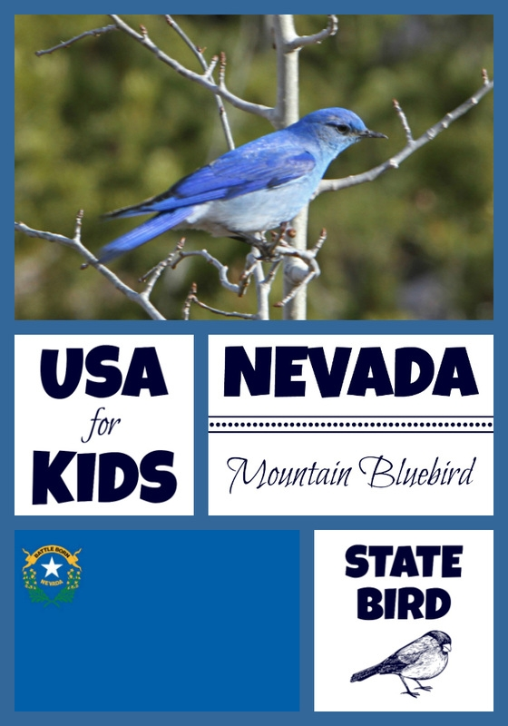 usa flag coloring page - nevada state bird