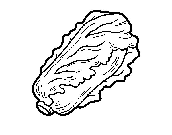 vegetable coloring pages - romaine lettuce