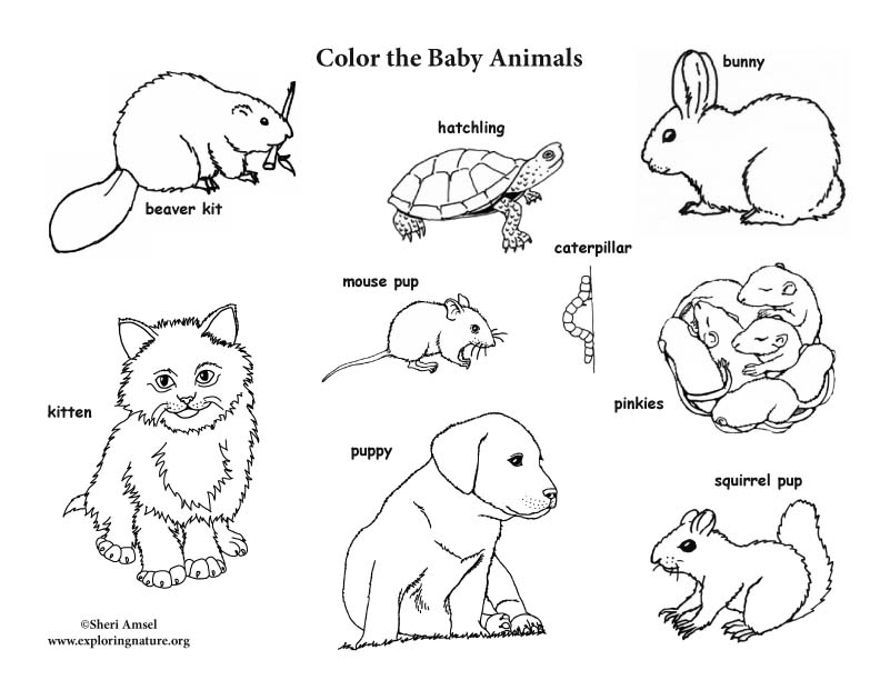 veterinary coloring pages - veterinary anatomy coloring pages sketch templates