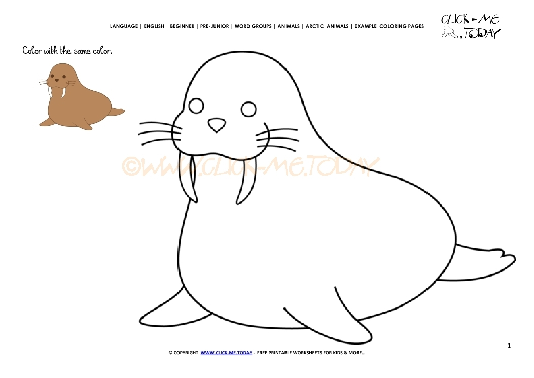 21 Walrus Coloring Page Images Free Coloring Pages Part 3