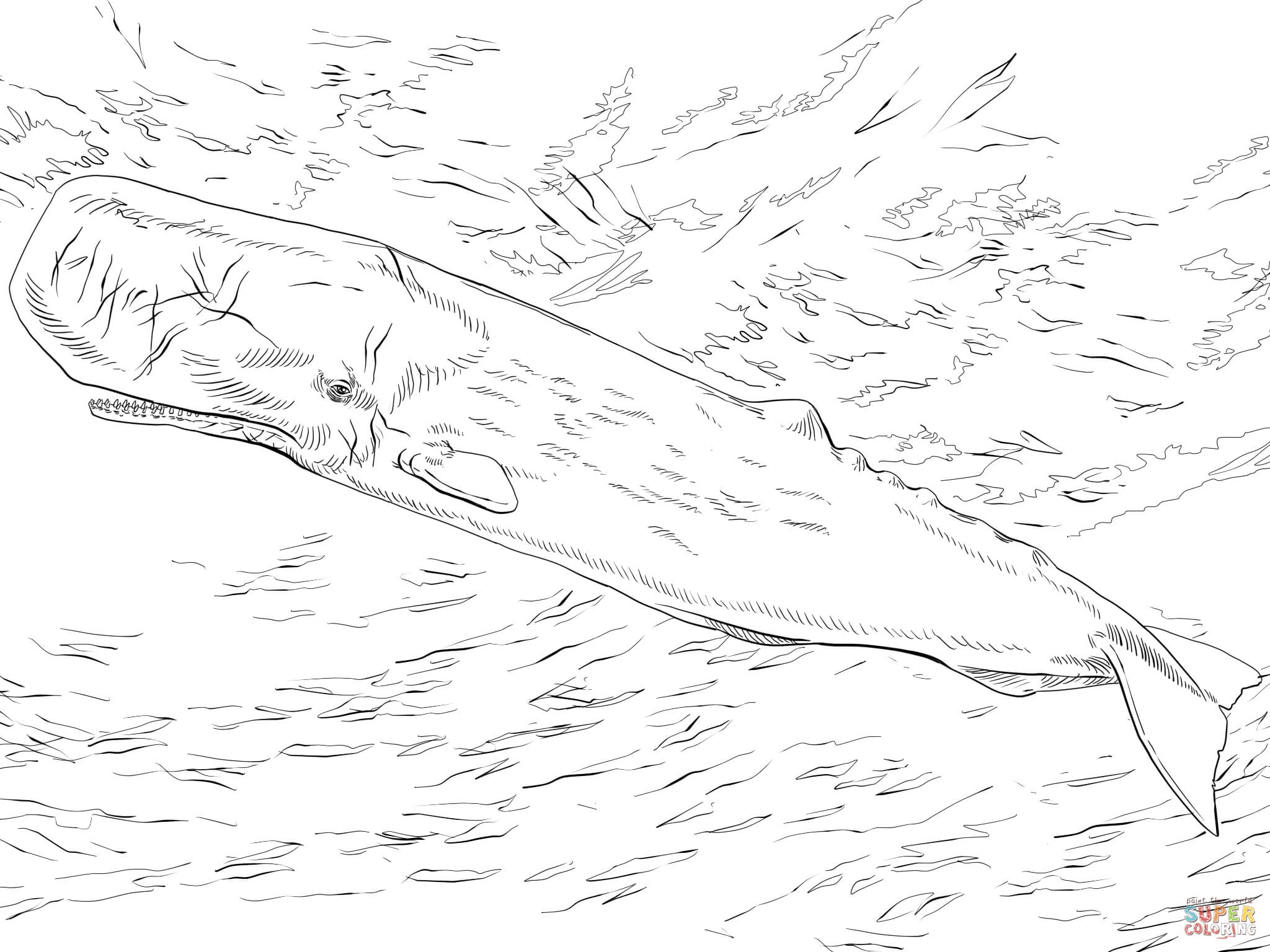 27 Whale Shark Coloring Page Printable Free Coloring Pages