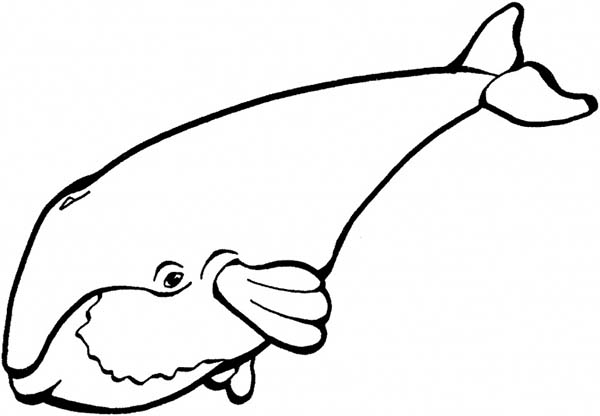 whale shark coloring page - cute drawing of a blue whale coloring page