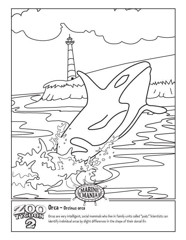 whale shark coloring page - killer whales coloring pages