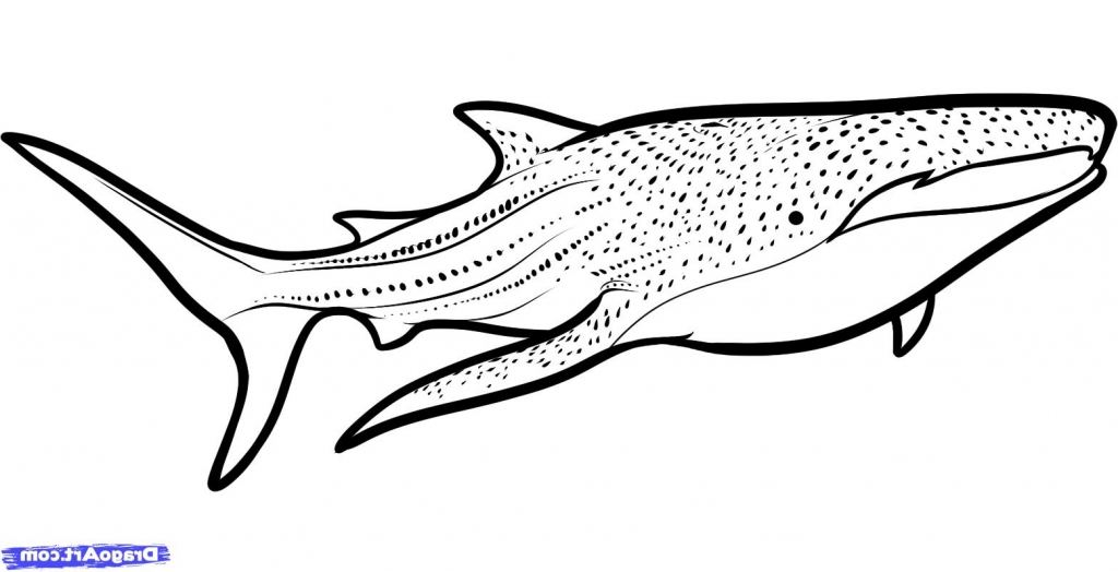 whale shark coloring page - simple shark drawing