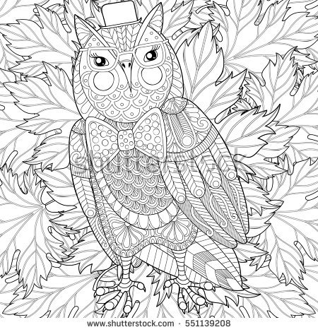 wildlife coloring pages - zentangle owl painting adult anti stress
