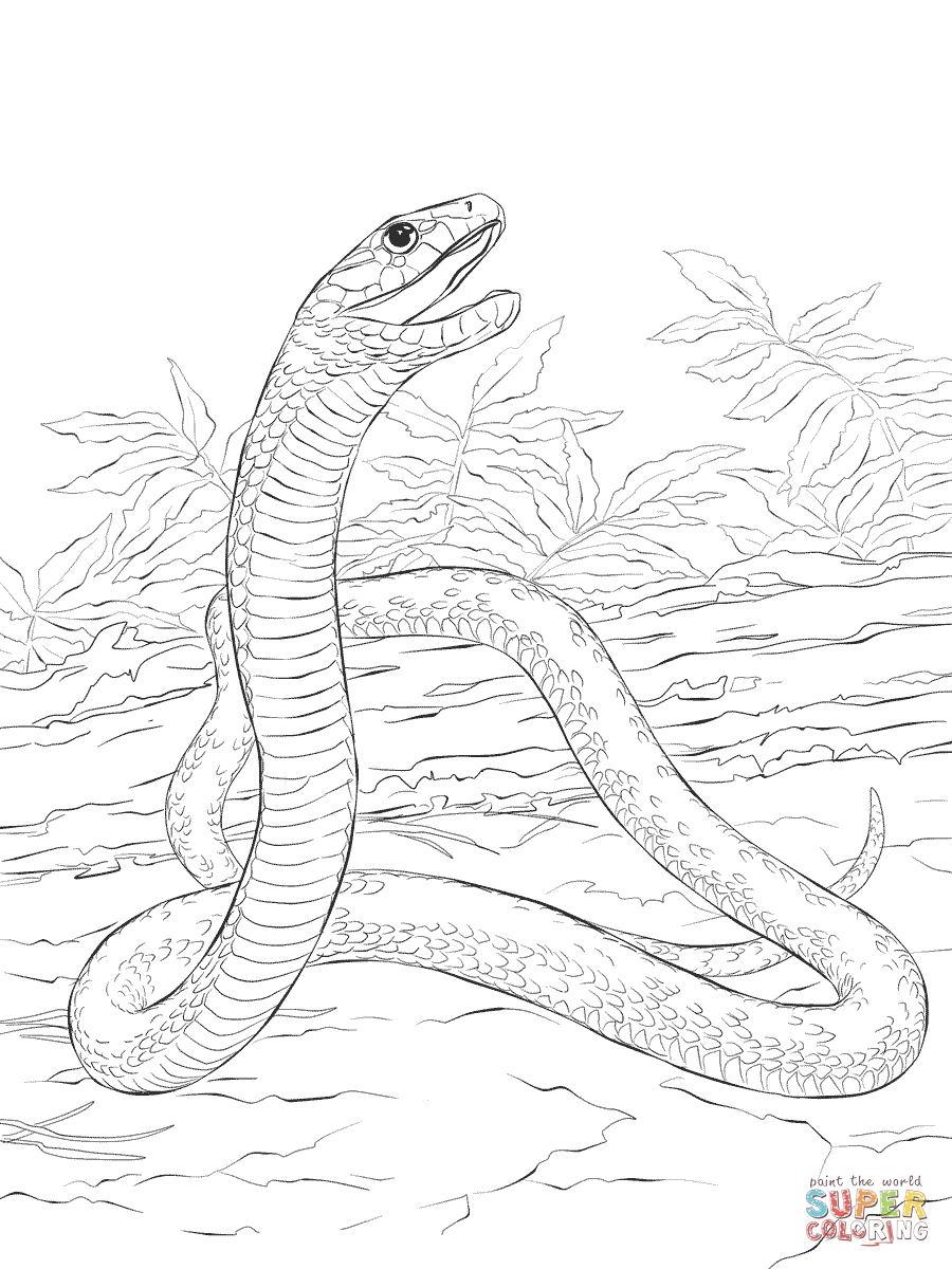 worm coloring pages - black mamba