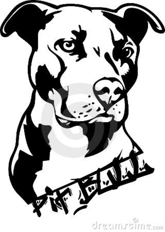 yorkie coloring pages - stock photography pit bull dog illustration image