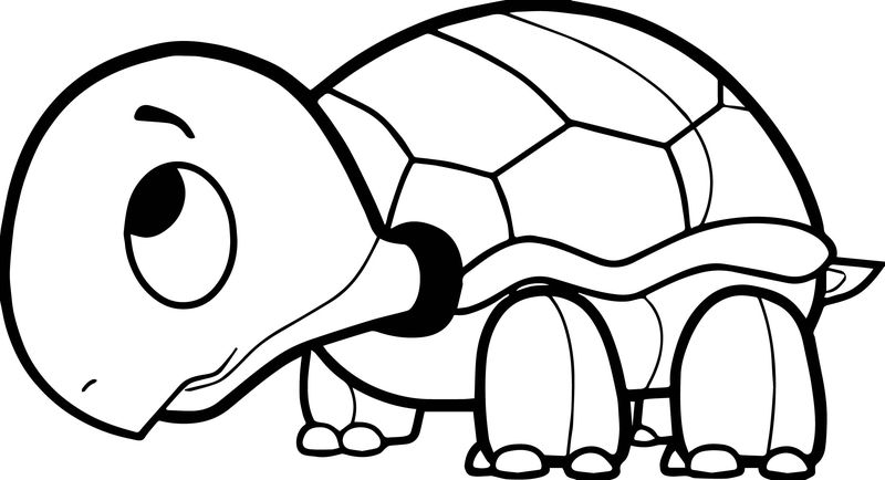 A Tortoise Turtle Coloring Page