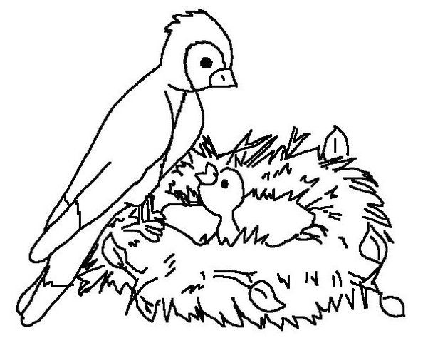 Activities Of A Bird In Nest Coloring Page