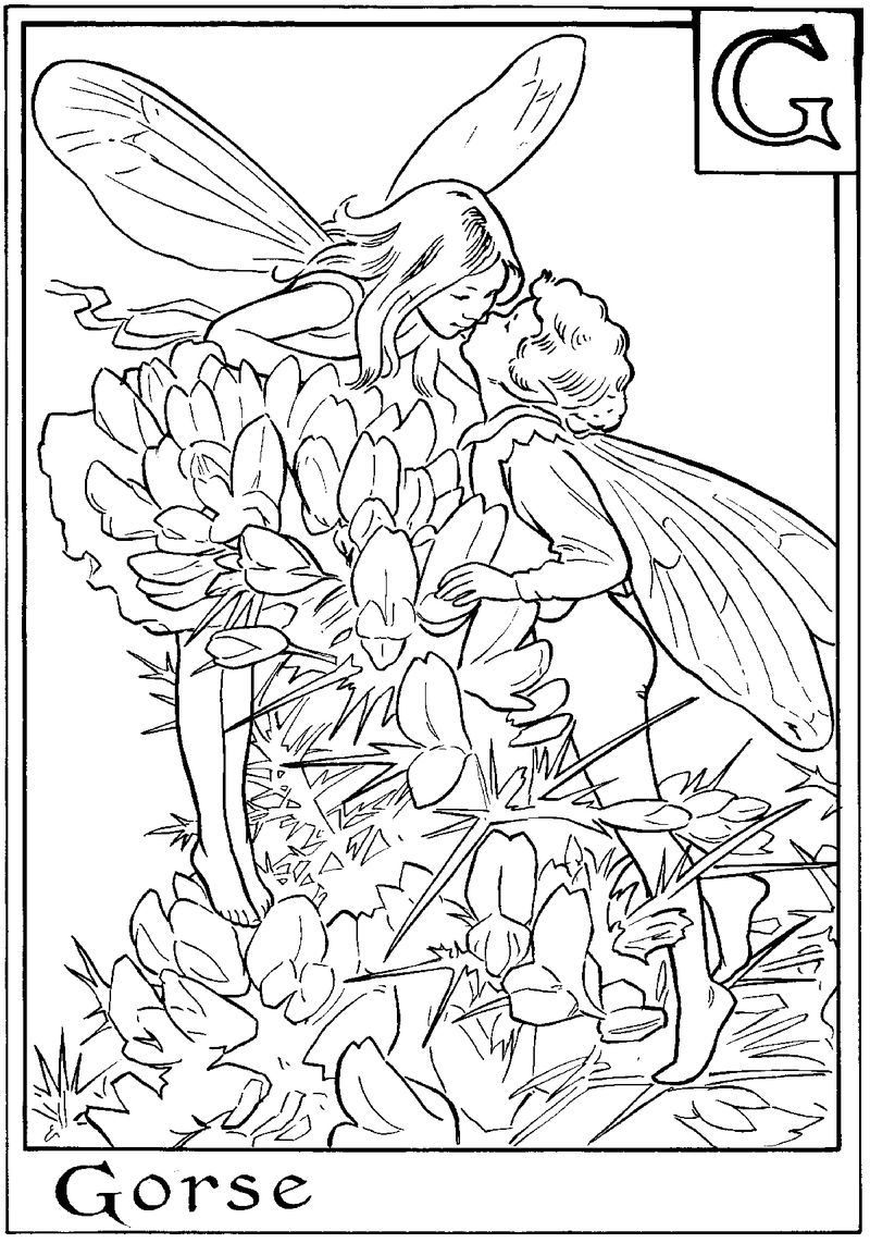 Alphabet fairy gorse coloring page