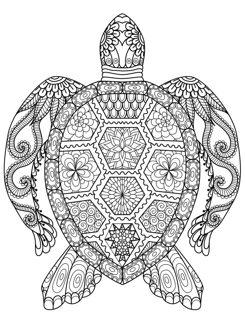 Animal Coloring Pages For Adults Turtle 001