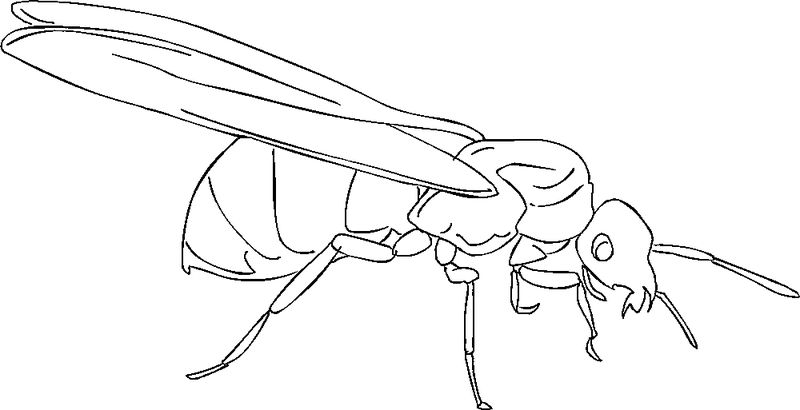 Ant Coloring Page Pictures