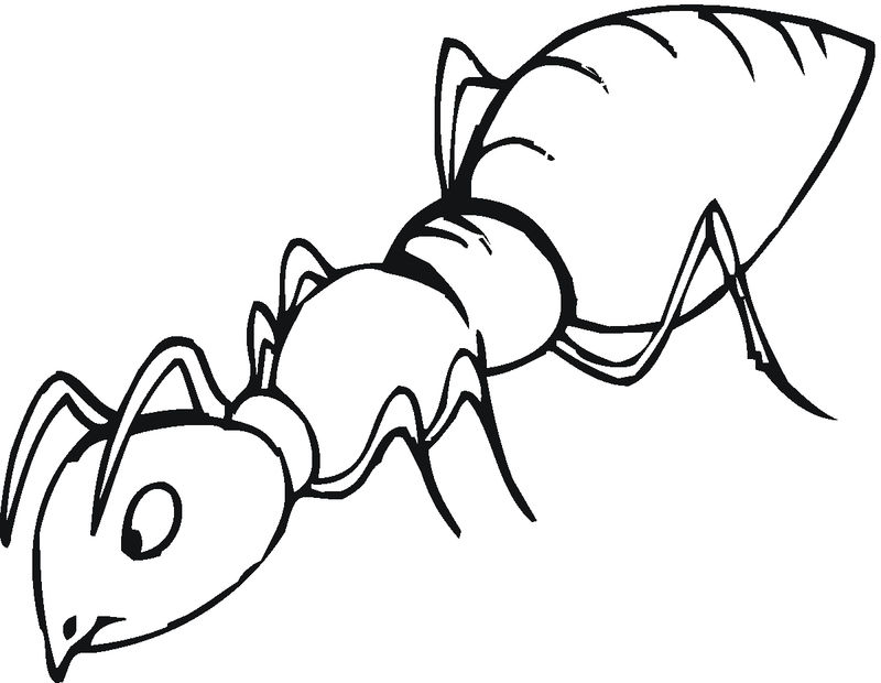 Ant Coloring Pages Free