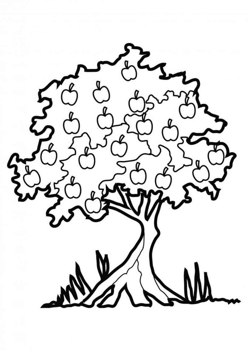Apple Tree Johnny Appleseed Coloring