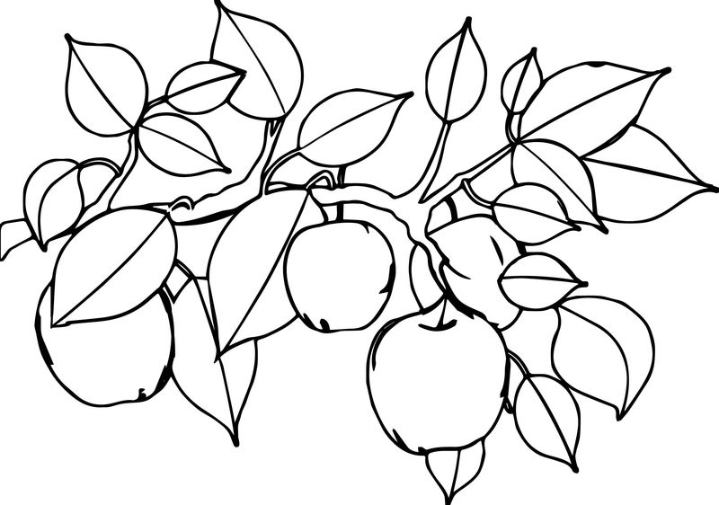 Apple Tree Leaf Coloring Page