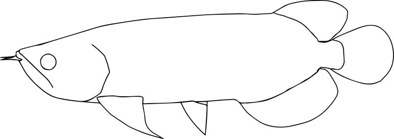 Asiaarowana0 Fish Coloring Page