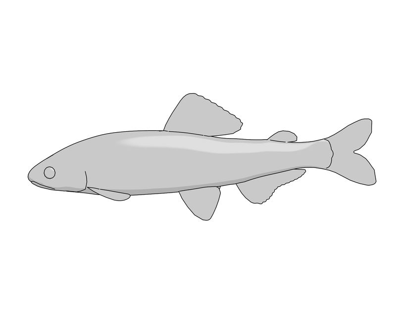 Ayu0 Coloring Pages Fish