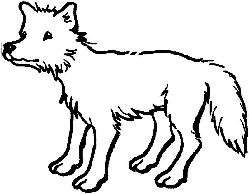 Baby Animal Coloring Pages Coyote