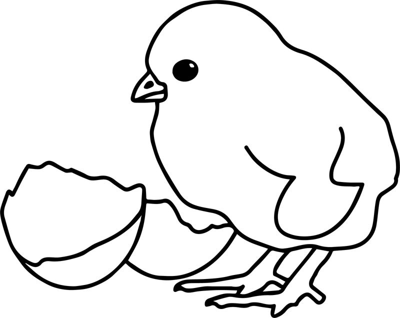 Baby Farm Animal Chicken Coloring Page