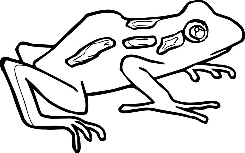 Baby Frog Coloring Page