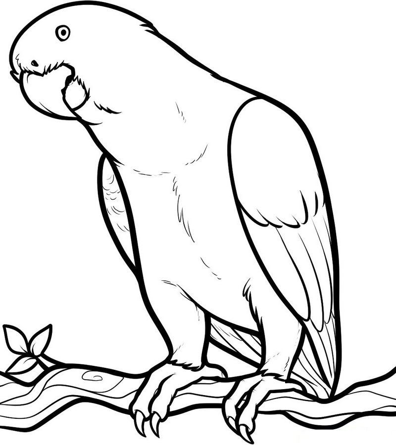 Beautiful Illustrations Of Parrot Bird Coloring Pictures
