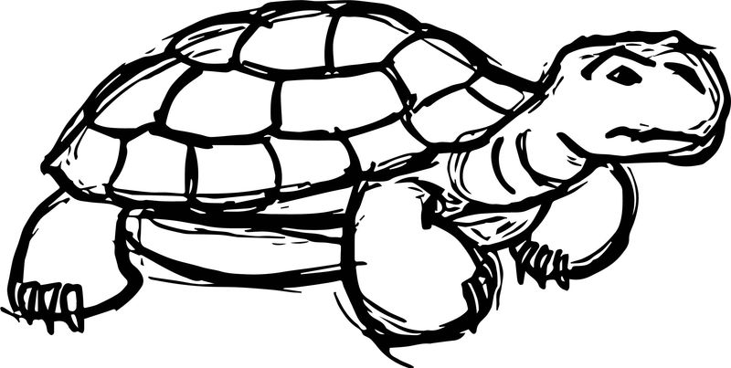 Bitter Tortoise Turtle Coloring Page