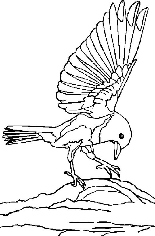 Bluebirds in the americas coloring sheet