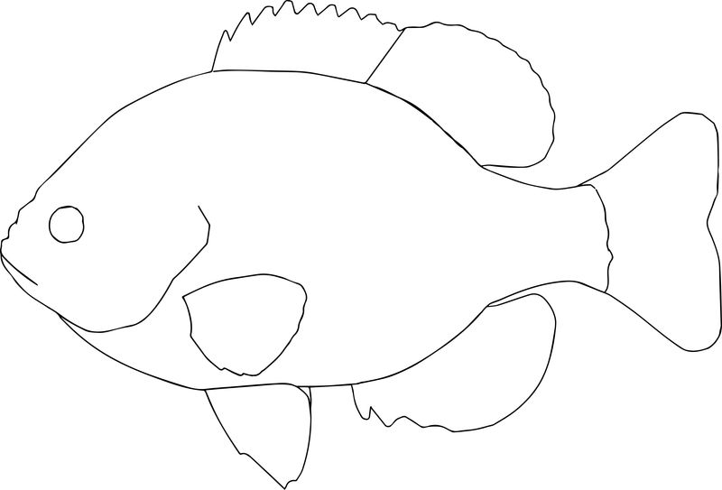 Bluegill0 Fish Coloring Page