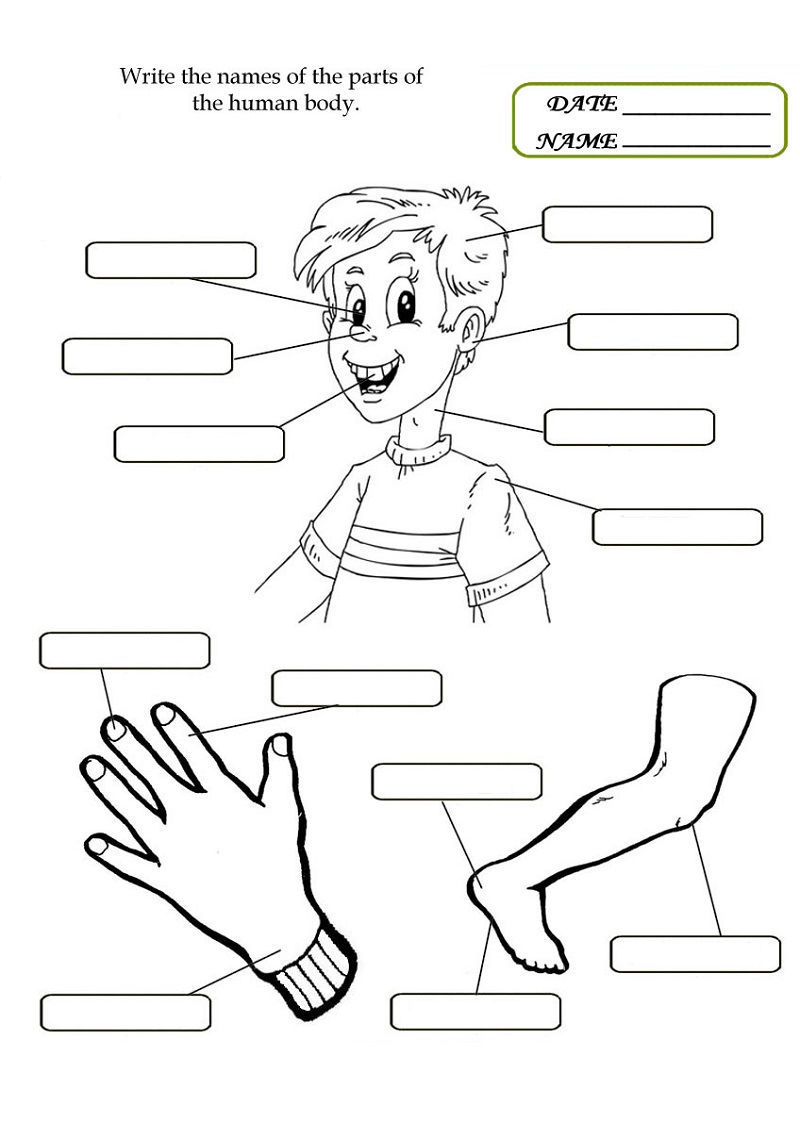 Body Worksheets For Preschoolers Activity 001