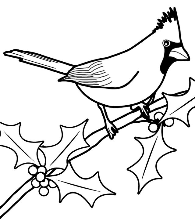 Cardinal Bird Coloring And Drawing Page