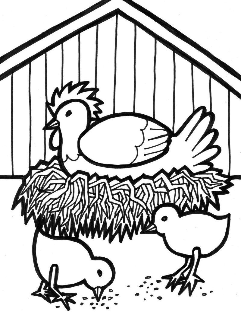 Chicken And Chicks Coloring Page