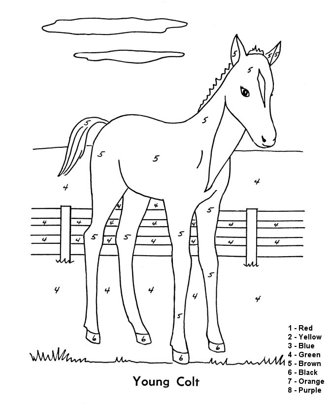 Color By Numbers Horse
