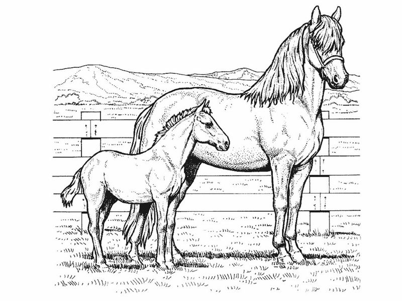 Color Pages Of Horses Printable
