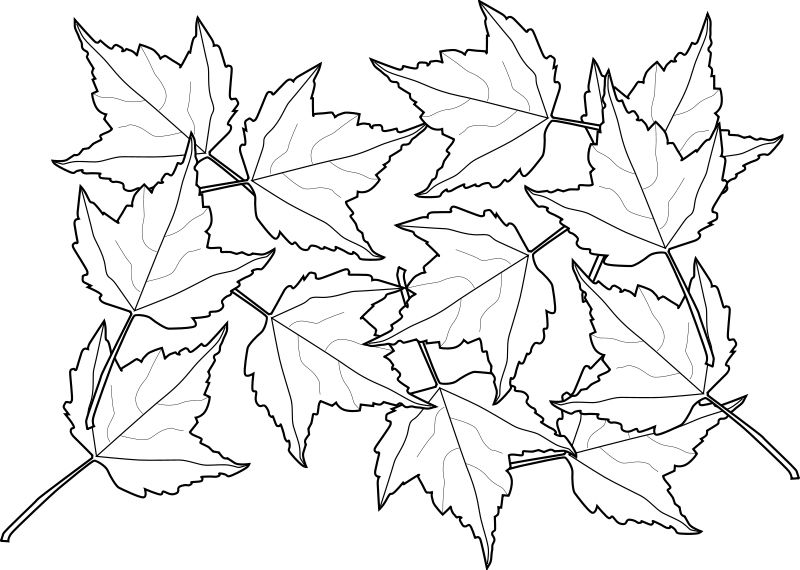 Colorful Fall Leaves Coloring Page