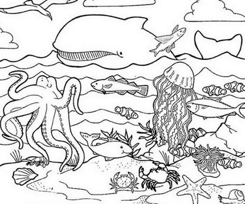 Coloring Book Animals Sea Ocean Animals 001