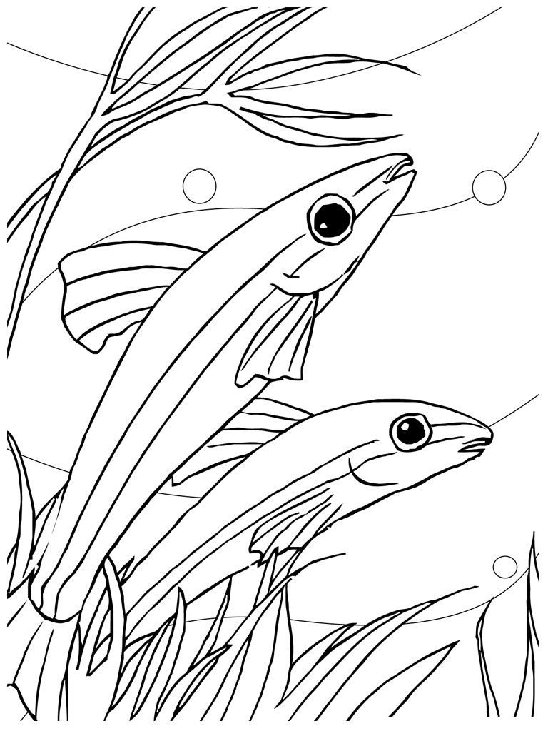 Coloring Fish Pages