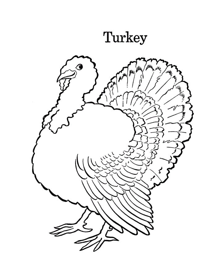 Coloring Page Of A Turkey