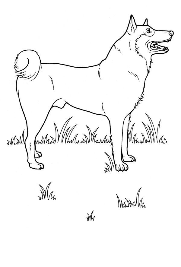 Coloring Pages Of A Dog